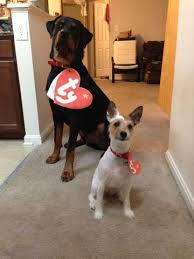 Boxer Puppy Halloween Costumes 92 Howloween Images Boxers Scary Halloween