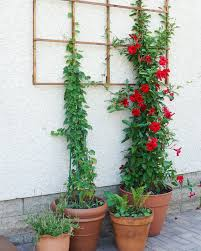How To Build A Trellis by Build A Modern Grid Trellis From Garden Stakes Francois Et Moi