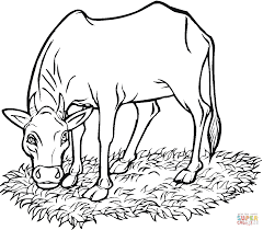 coloring pages cow cattle coloring pages free coloring pages