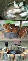 types of backyard chickens best 25 raising chickens ideas on pinterest chook pen building