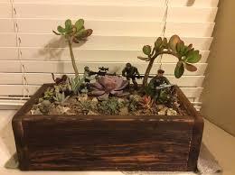 easy cheap cactus desert terrarium 10 steps with pictures