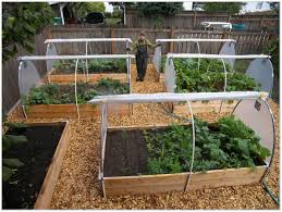 Small Kitchen Garden Ideas Backyards Excellent Small Vegetable Garden Ideas Backyard Beauty