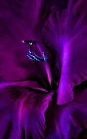 Colors Of Purple 345 Best The Color Purple Images On Pinterest All Things Purple