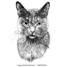 hand drawn portrait cute cat sketch stock vector 597921071