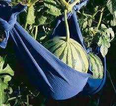 17 clever vegetable garden hacks