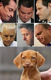 Know Your Meme Dog - how to tell if your dog is involved in a sex scandal dogs know