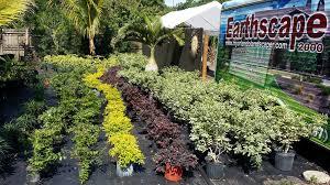 earthscape orlando landscaping irrigation tree u0026 nursery