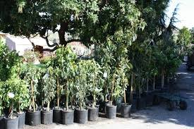 my business our trees supplies and services