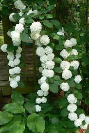 white hydrangeas 17 dreamy hydrangea gardens that are giving us major inspiration