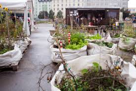 Houston Urban Gardeners - urban gardens sprout vegetables and green thumbs prague wandering