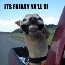 Friday Funny Memes - funny friday animal memes