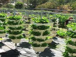 dividers beautiful design vertical gardening ideas 19 interesting