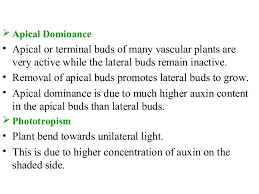 What Is Growth Movement Of A Plant Toward Light Called Plant Growth Regulators