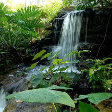 Botanical Gardens Sarasota Fl Botanical Gardens In Florida Home Design Ideas And Pictures