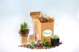 succulent kits decorative glass succulent terrarium terrarium kits hanging
