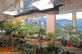 Grow Room Lights Mpbf Journal 2 The Basics Of Indoor Bonsai Feb 2013