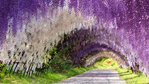 flower places the 8 prettiest places in the world to see flowers in bloom