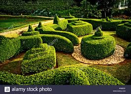 neat sculptured topiary hedges in an ornamental garden in hilly