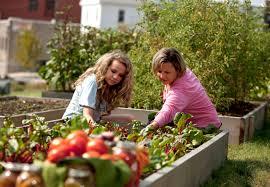 gem se pflanzen balkon obst und gemüse richtig einpflanzen obi berät