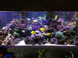 thanksgiving food calculator thanksgiving feast for your reef tank