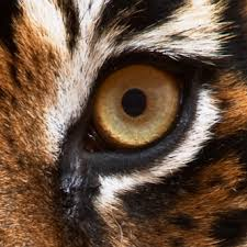portfolio with the eye of the tiger