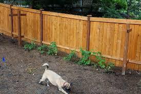 Rasberry Trellis Mavis Butterfield Backyard Garden Plot Pictures 10 18 15 One