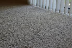How Long Do Fleas Live In Carpet Flea Carpet Carpet Vidalondon