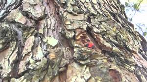 Cool Tree by Cool Tree Geocache Youtube