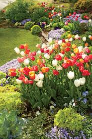 here u0027s how a self taught gardener grows over 800 tulips every
