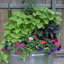 best 25 trough planters ideas on pinterest wooden trough