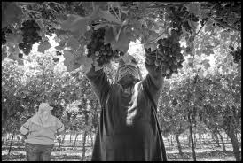 agricultural journalism jobs ukiah the fight isn t over for farm worker overtime capital main