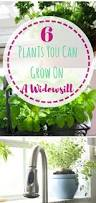 928 best container gardening images on pinterest indoor