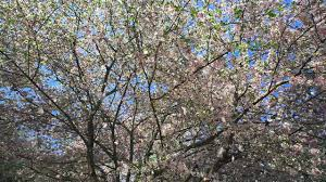Beautiful Pictures Of Spring by Beautiful Earth When Spring Begins Youtube