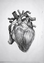 black and grey human heart tattoo design