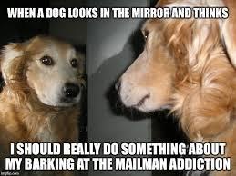 Mirror Meme - mirror dog memes imgflip