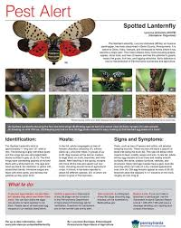 Colors Of Spring 2017 Spotted Lanternfly Pest Alert Township Of Spring