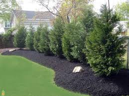 backyard privacy ideas with plants home outdoor decoration