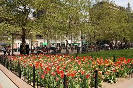boston flowers boston garden flowers sky