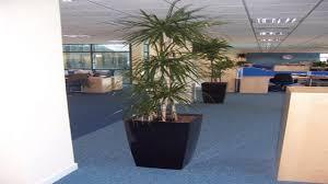 tall office plants indoor plants indirect light unique indoor