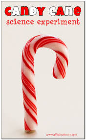 thanksgiving science activities candy cane science experiment gift of curiosity