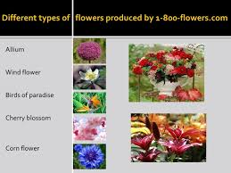 Flower Promotion Codes - 1 800 flowers promo codes