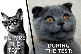 Test Taking Meme - how feelz test taking shared by yanito freminoshi