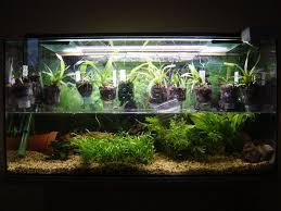 idee deco aquarium aquarium reconverti bricolages montages installations