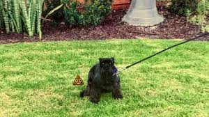 how to teach your dog to on leash rover com