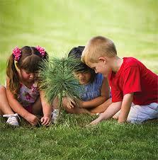 my tree the arbor day foundation