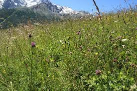 chambre agriculture hautes alpes chambre agriculture hautes alpes 8 prairies fleuries le prix de