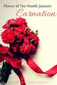 Flowers Of The Month Best Gift Idea Carnation Flower Meaning Flower Of The Month U2022