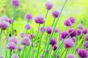 Image result for تقارن بهار شکفتن زيباترين گل هستي با بهار طبيعت مبارک