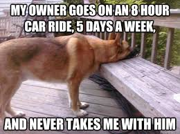 Dog In Car Meme - my owner goes on an 8 hour car ride 5 days a week and never