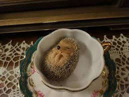 baby hedgehog there are lots of ornaments and decorations in
